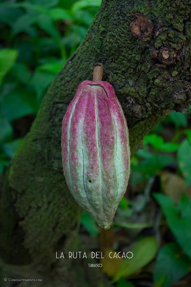 Descubriendo la Ruta del Cacao en Tasbaco