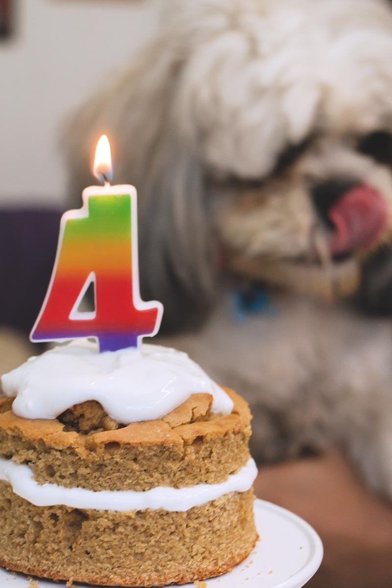 cumple 4 Baci pastel para perritos1