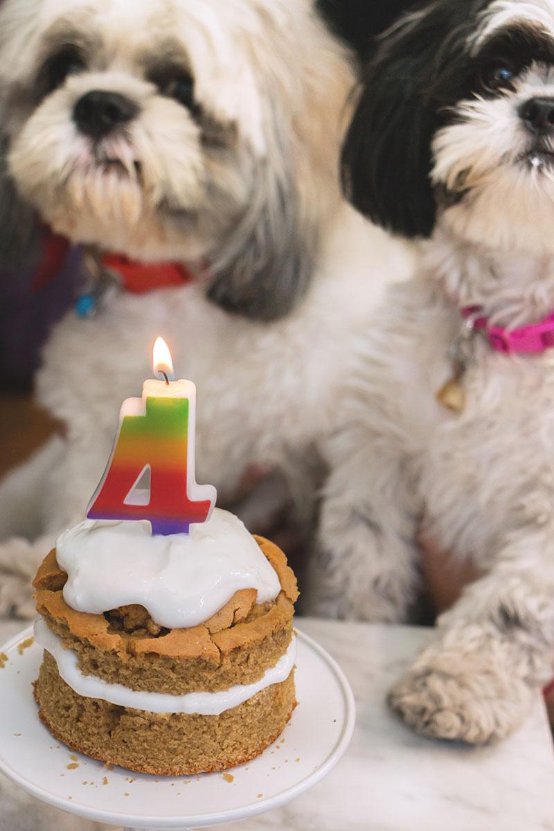Pastel Para Perritos El 4 Cumple De Baci